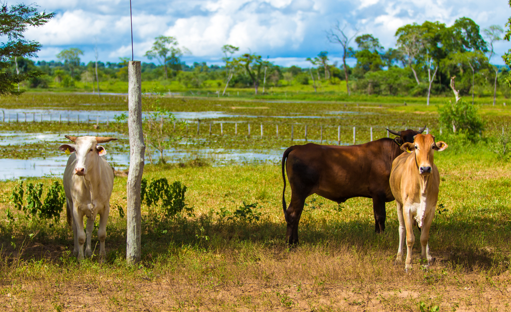 Pantanal landscape with animals